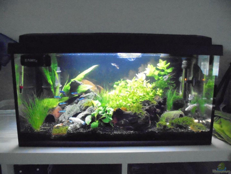 Aquarium von beba becken 32033 for Aquarium becken