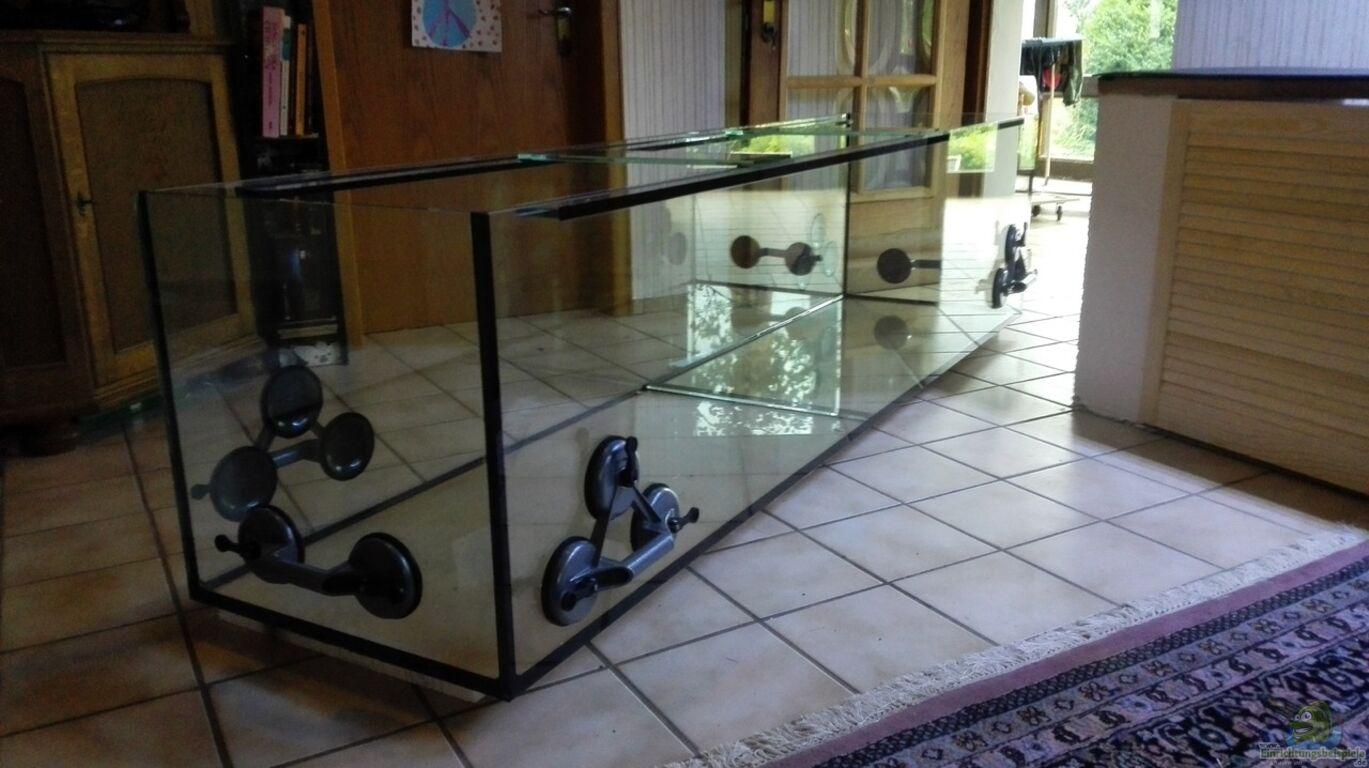 aquarium von elsiman elsis trophochromistank. Black Bedroom Furniture Sets. Home Design Ideas
