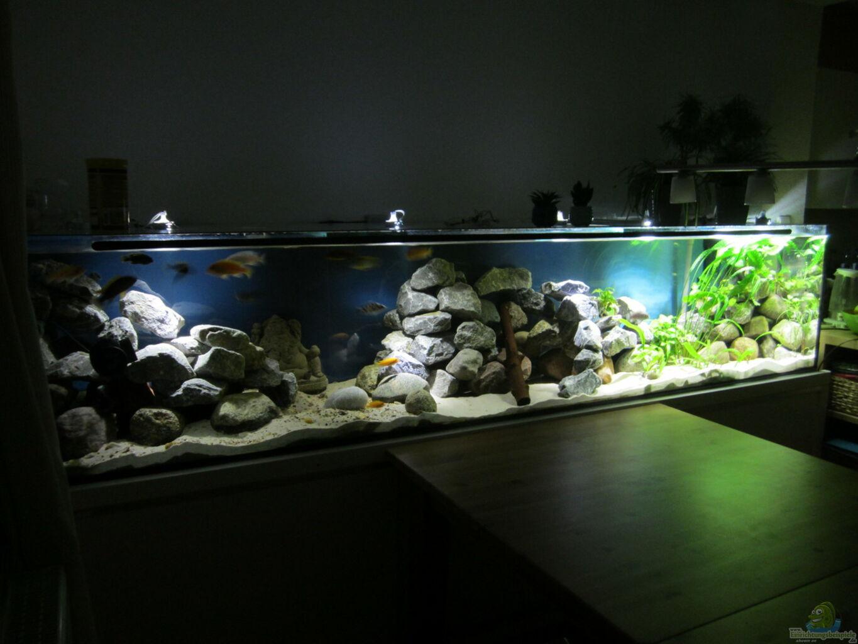 Aquarium von raid 0 k chenfische for Zierfische hannover