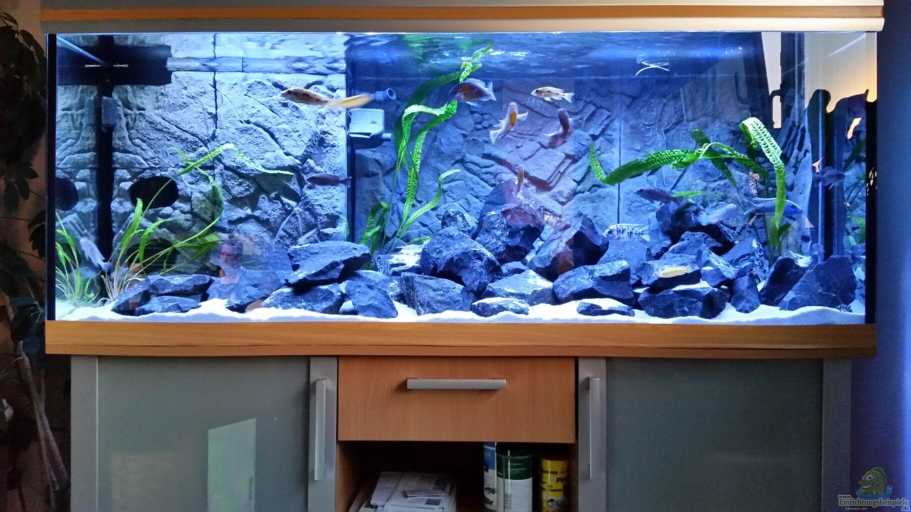 aquarium von christian osterloh malawis im basalt. Black Bedroom Furniture Sets. Home Design Ideas
