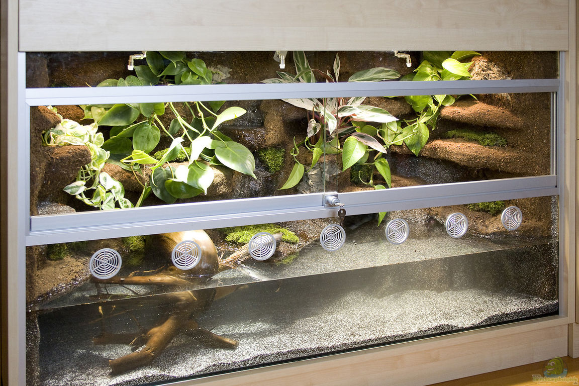 aquarien als paludarium einrichten. Black Bedroom Furniture Sets. Home Design Ideas