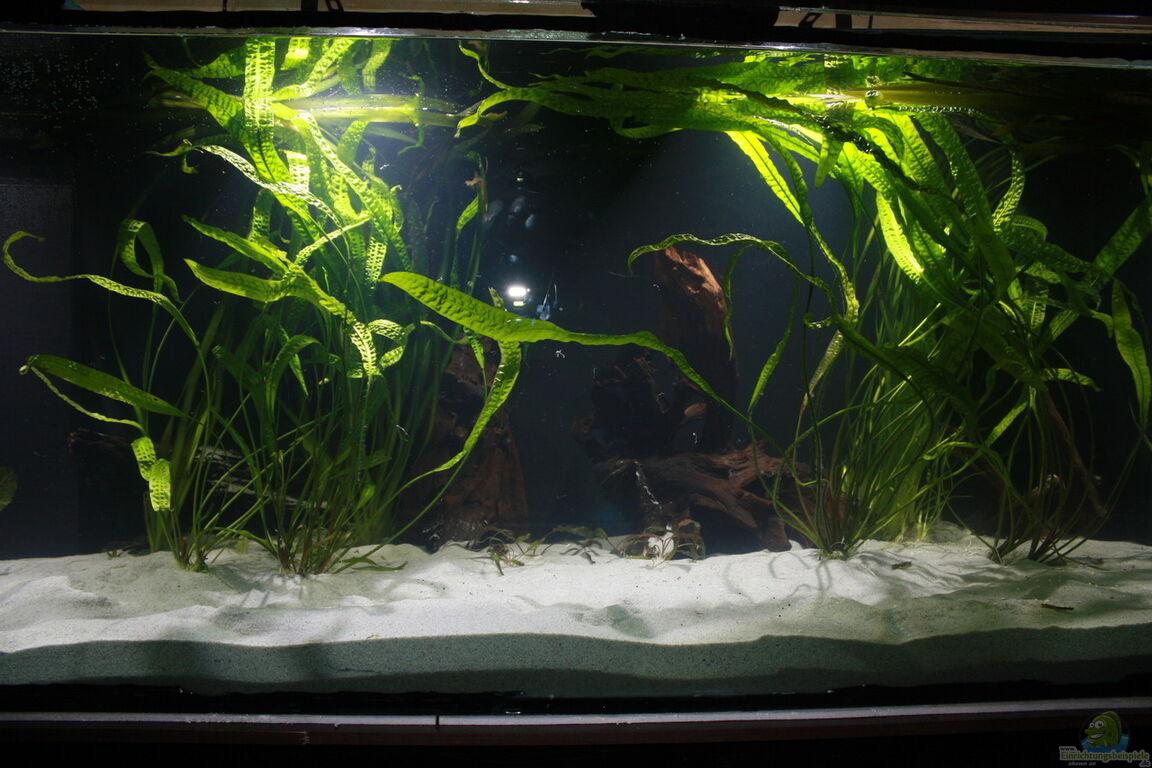 aquarium von fishers friend kuno s traum. Black Bedroom Furniture Sets. Home Design Ideas
