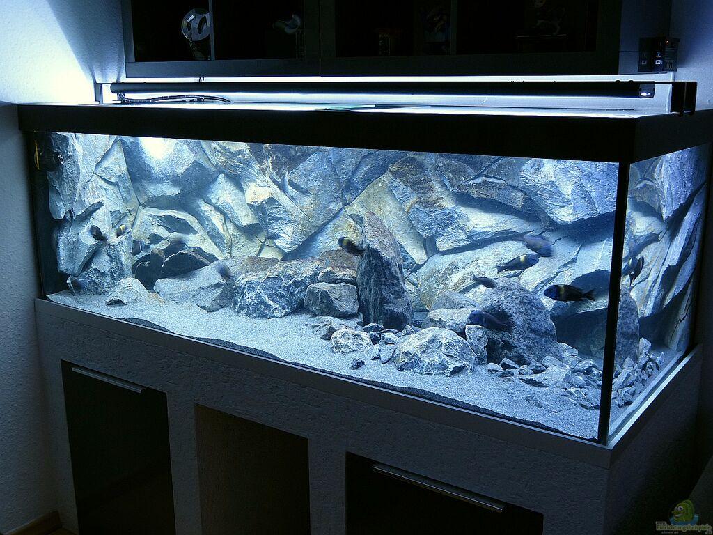 Aquarium von baumringzaehler: Tanganjika Aquarium