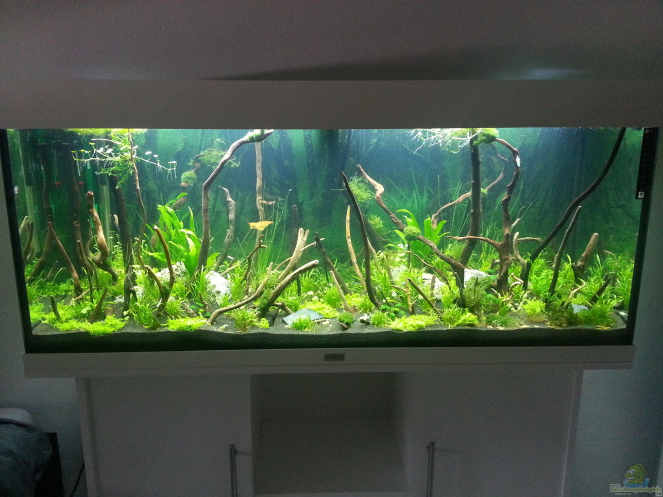 Example no 32118 from the category aquascaping for Aquarium 120x40x50
