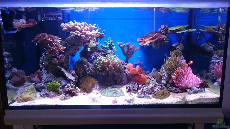 aquarium von wittamine 140 liter meerwasseraquarium. Black Bedroom Furniture Sets. Home Design Ideas