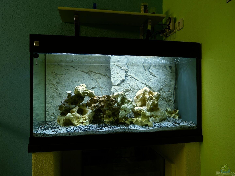 Baumringzaehler 32186 duboisi kinderzimmer for Aquarium im kinderzimmer