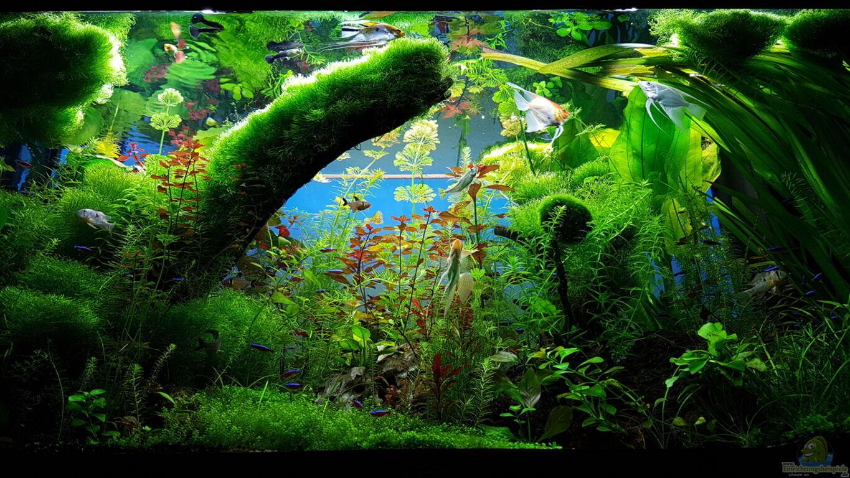 Anfanger Mit Gefuhlt 150 Fragen Neues 240l Aquarium Und Noch Gar