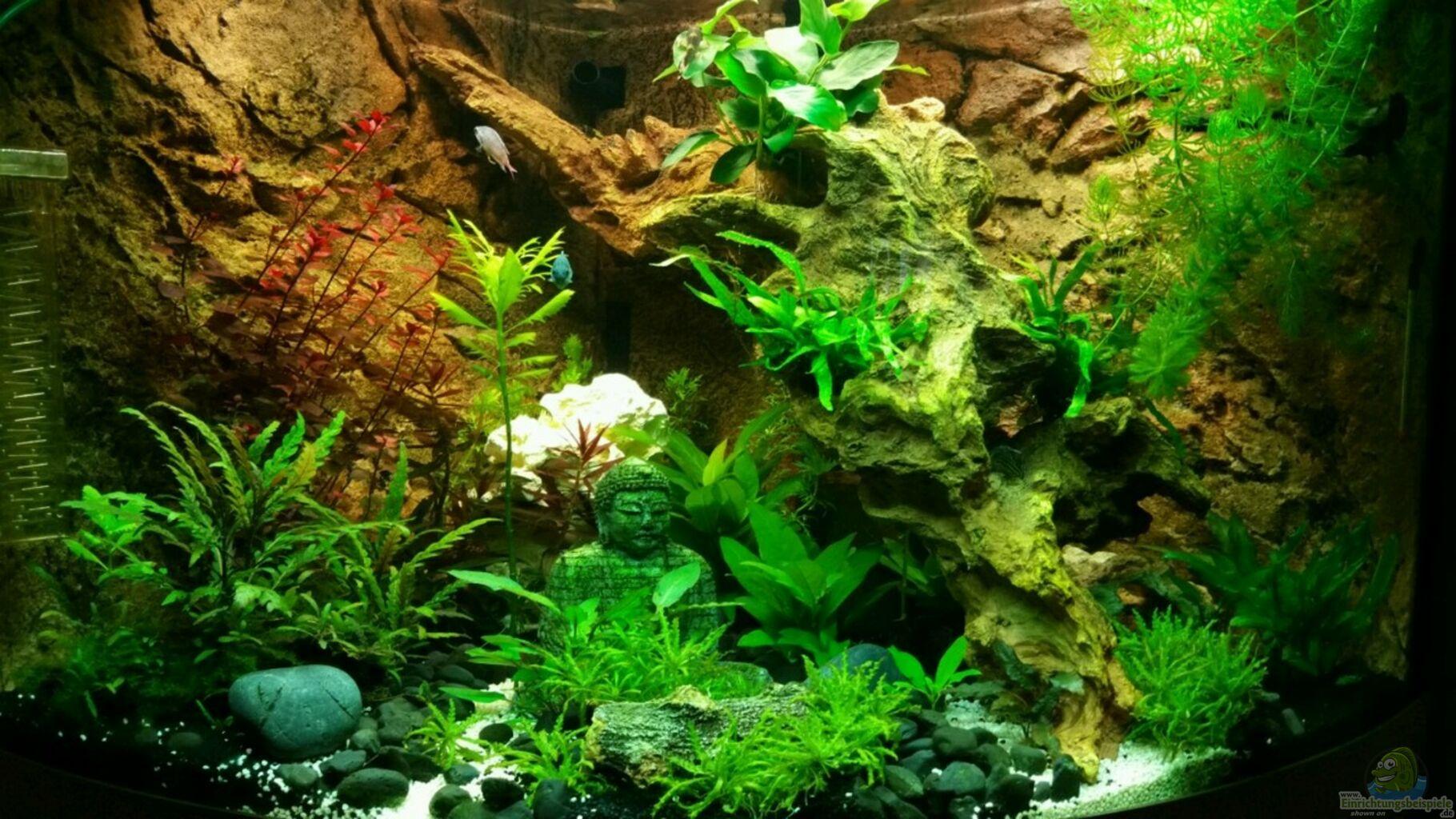 aquarium von chita trigon 190 buddha. Black Bedroom Furniture Sets. Home Design Ideas