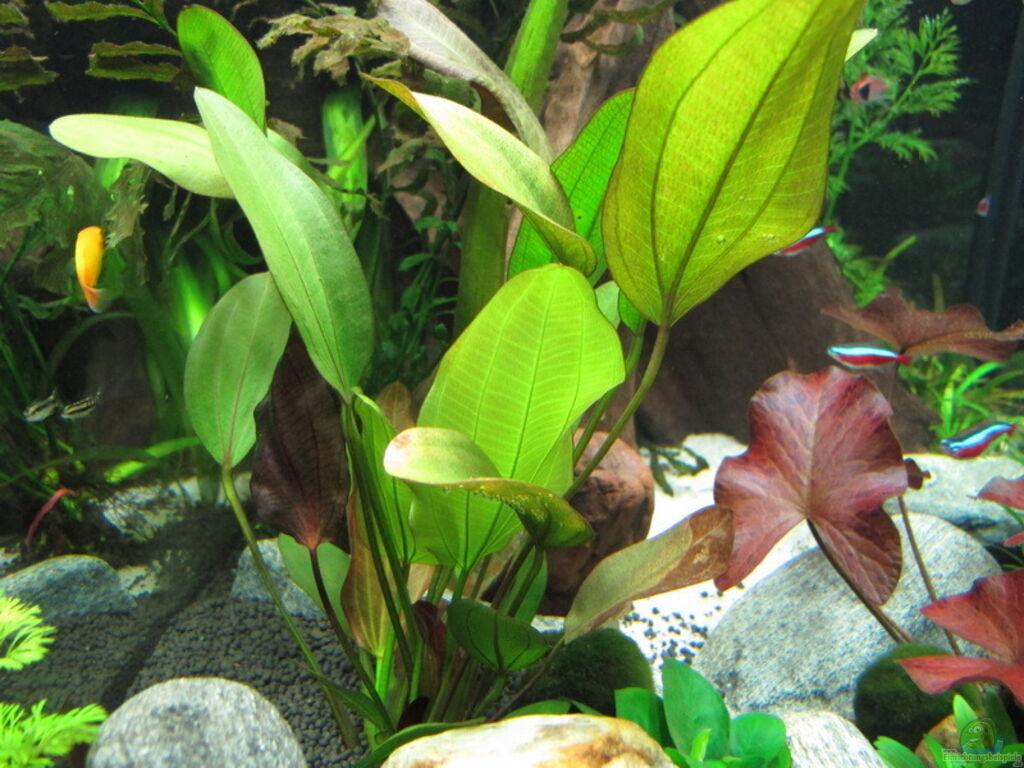 aquarium von sarah wt ewiger fr hling. Black Bedroom Furniture Sets. Home Design Ideas