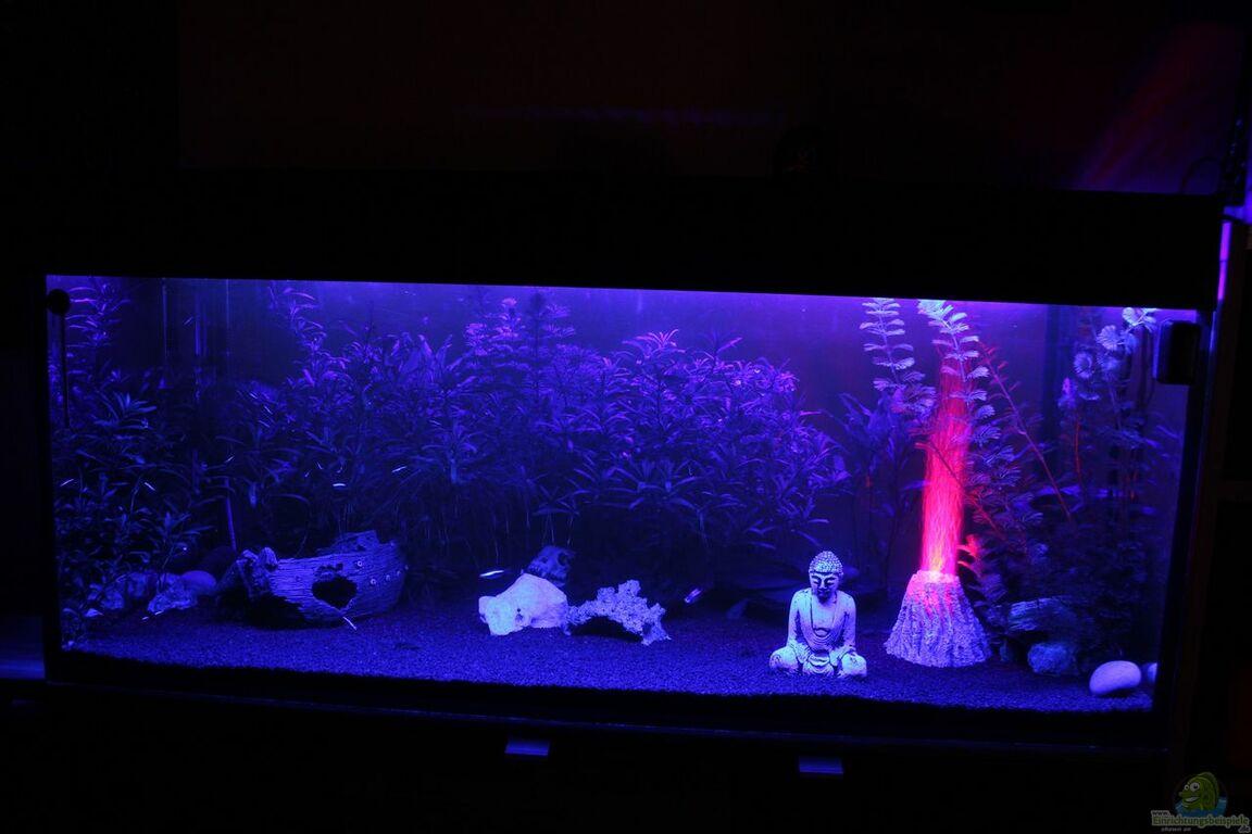 aquarium von chaos master 350l gesellschaftsbecken. Black Bedroom Furniture Sets. Home Design Ideas