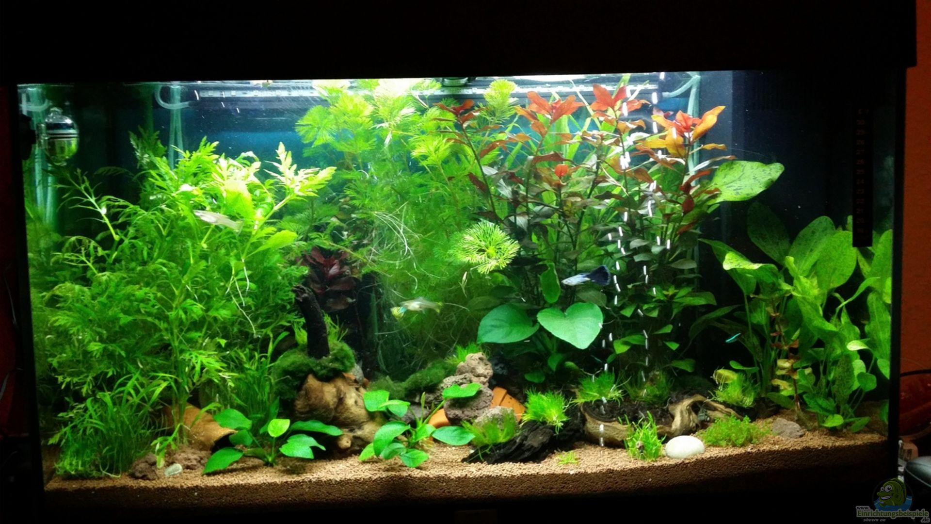aquarium juwel rio 125 gesellschaftsaquarium aus juwel rio 125 gesellschaftsaquarium von. Black Bedroom Furniture Sets. Home Design Ideas