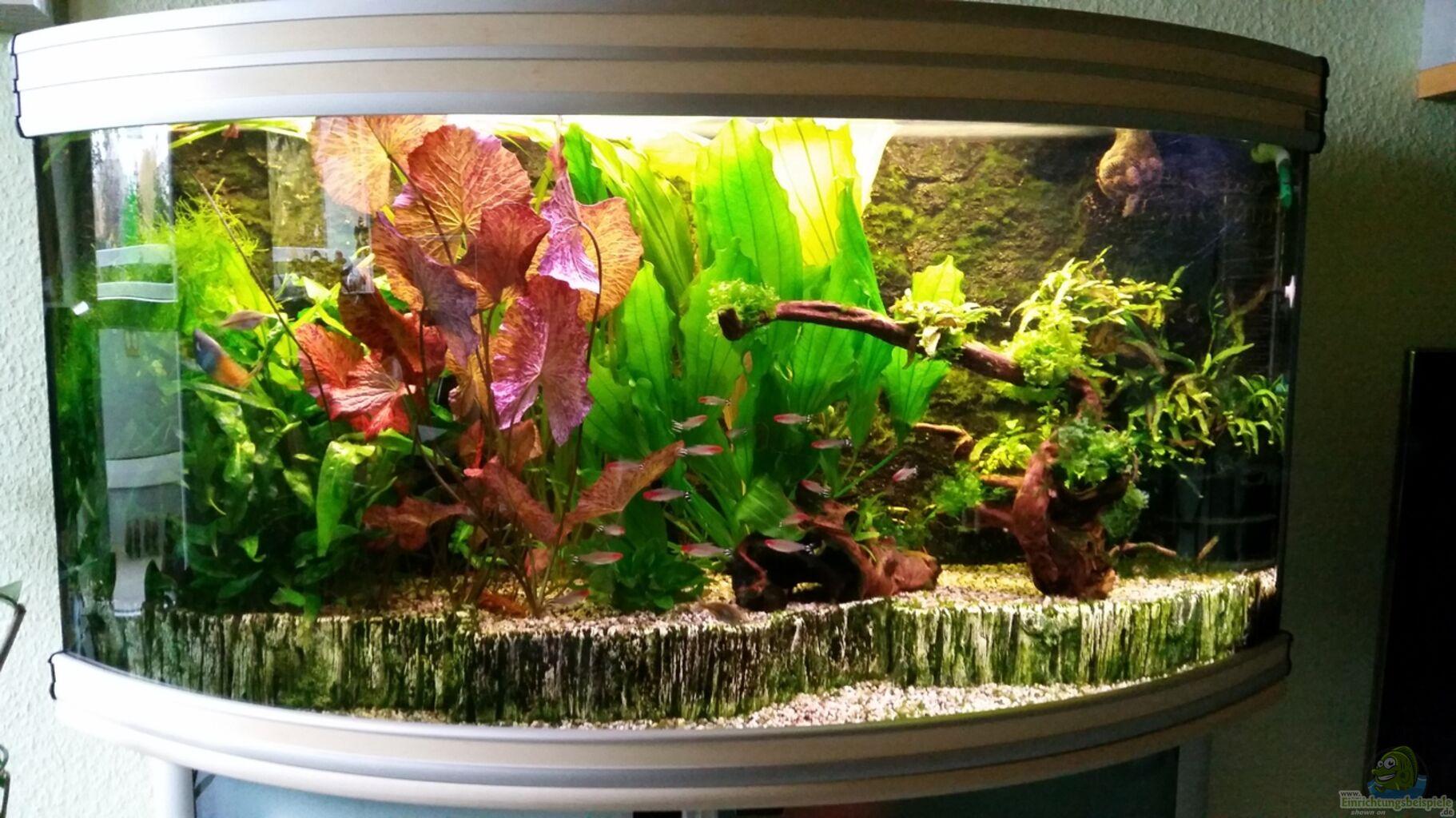 einrichtung 60 liter aquarium modisches design von. Black Bedroom Furniture Sets. Home Design Ideas