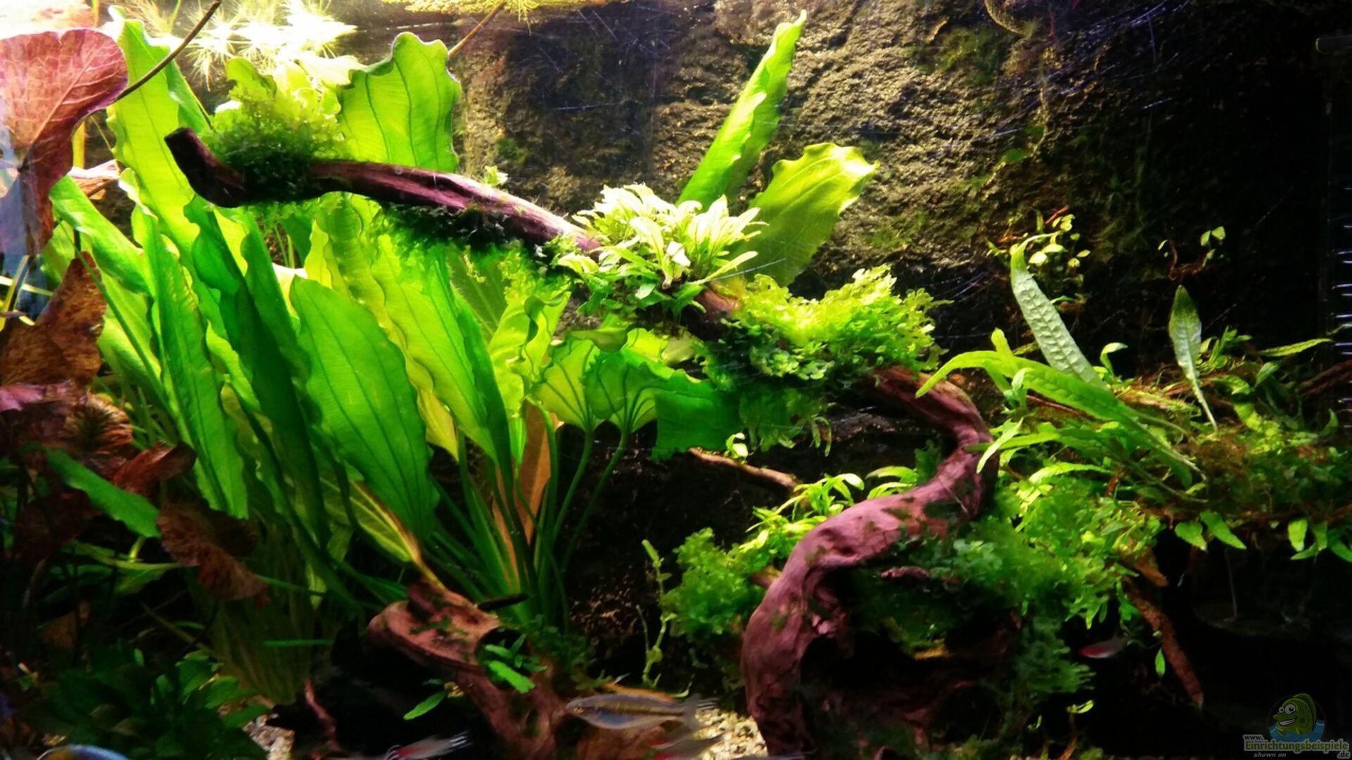 aquarium von gigi panoramabecken 300 liter. Black Bedroom Furniture Sets. Home Design Ideas