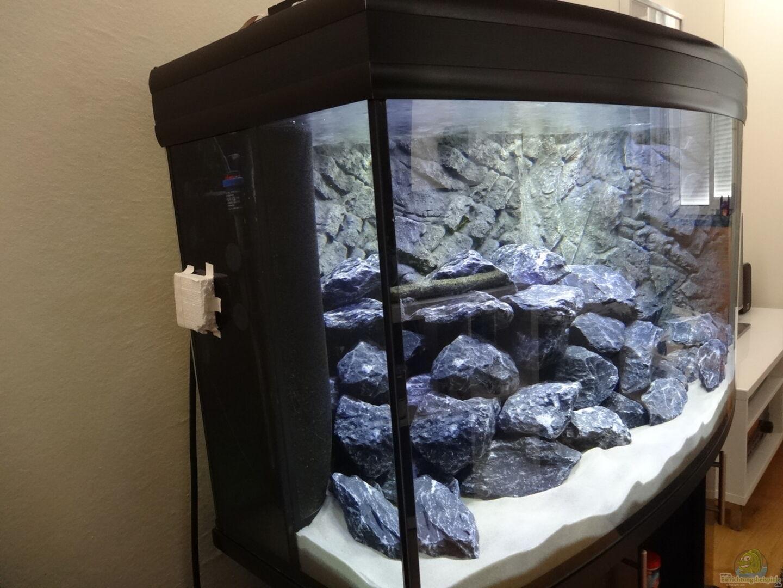 aquarium von max v 32302 malawi mbuna. Black Bedroom Furniture Sets. Home Design Ideas