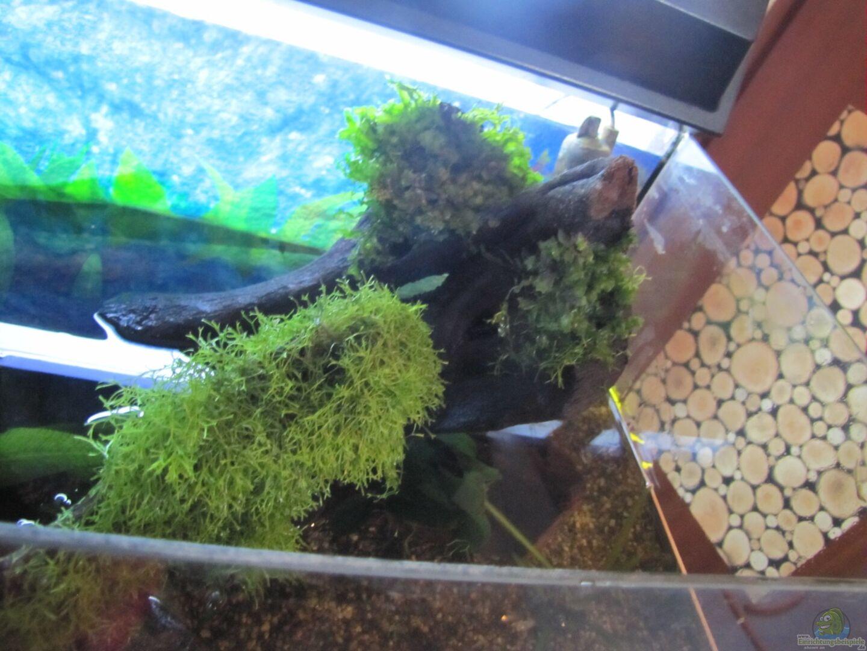 pflanzen im aquarium luke s 54 aufgel st aus luke s 54 aufgel st von leo fan. Black Bedroom Furniture Sets. Home Design Ideas