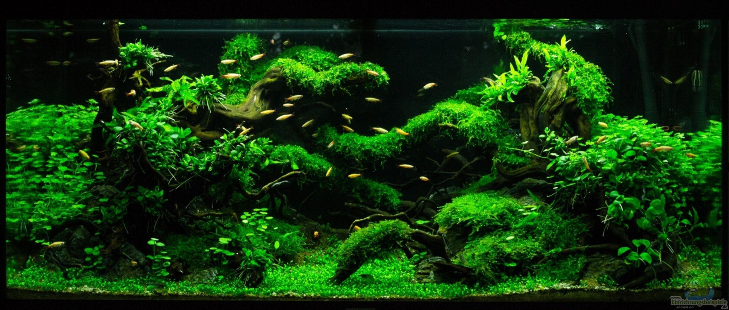 Aquarium von fredo fuss schulaquarium for Aquarium einrichtungsideen