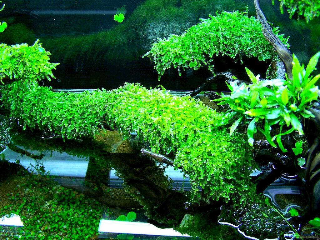 aquarium von fredo fuss schulaquarium. Black Bedroom Furniture Sets. Home Design Ideas