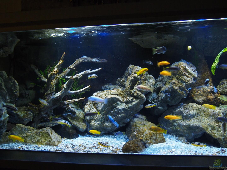 Aquarium von malawinator becken 32316 for Aquarium becken