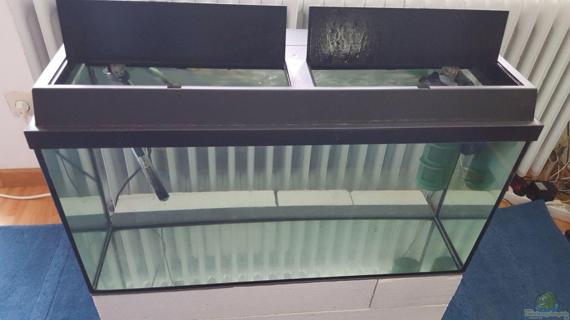 aquarium von johannes l diskus quarant ne becken. Black Bedroom Furniture Sets. Home Design Ideas