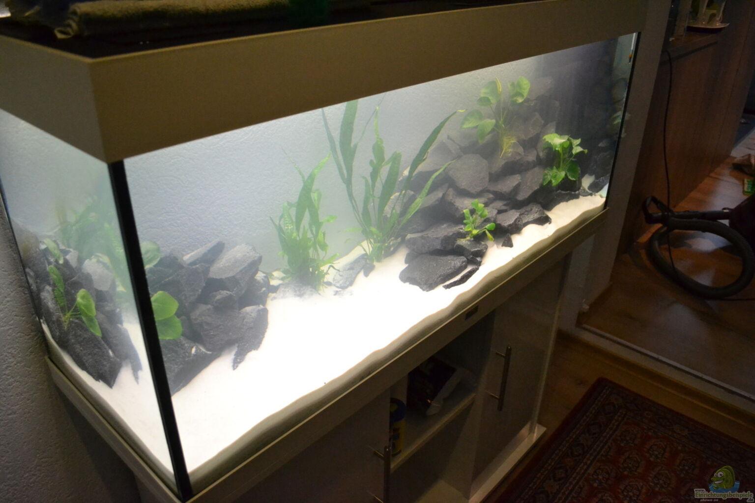 aquarium von aquadaniel malawi 240. Black Bedroom Furniture Sets. Home Design Ideas