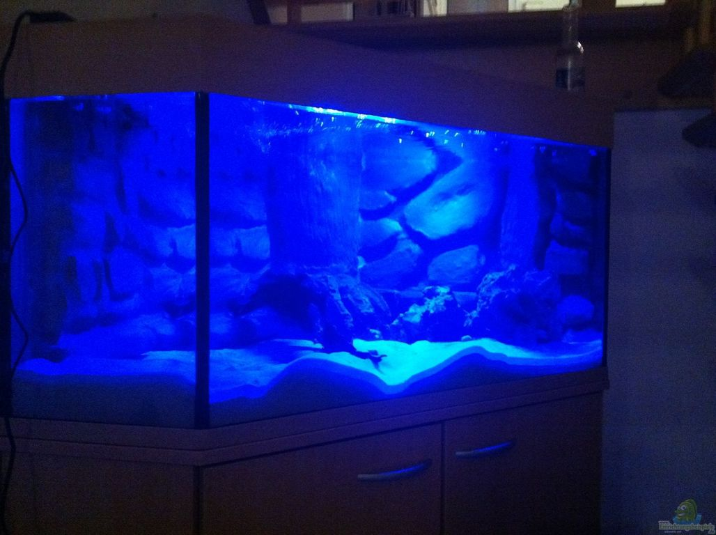 aquarium von ecky ecky s malawi becken. Black Bedroom Furniture Sets. Home Design Ideas