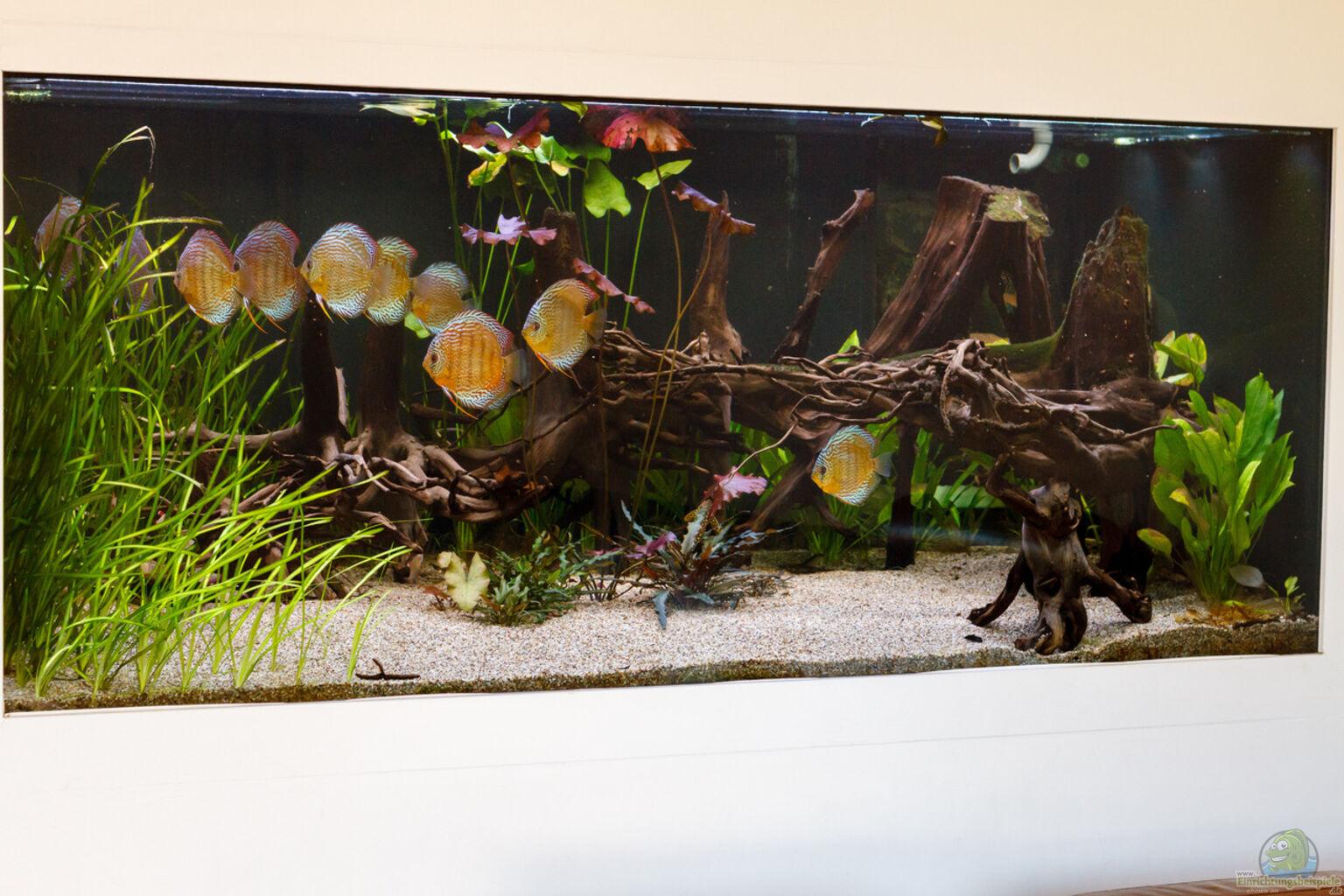 aquarium von diskus aman amazonas diskus. Black Bedroom Furniture Sets. Home Design Ideas
