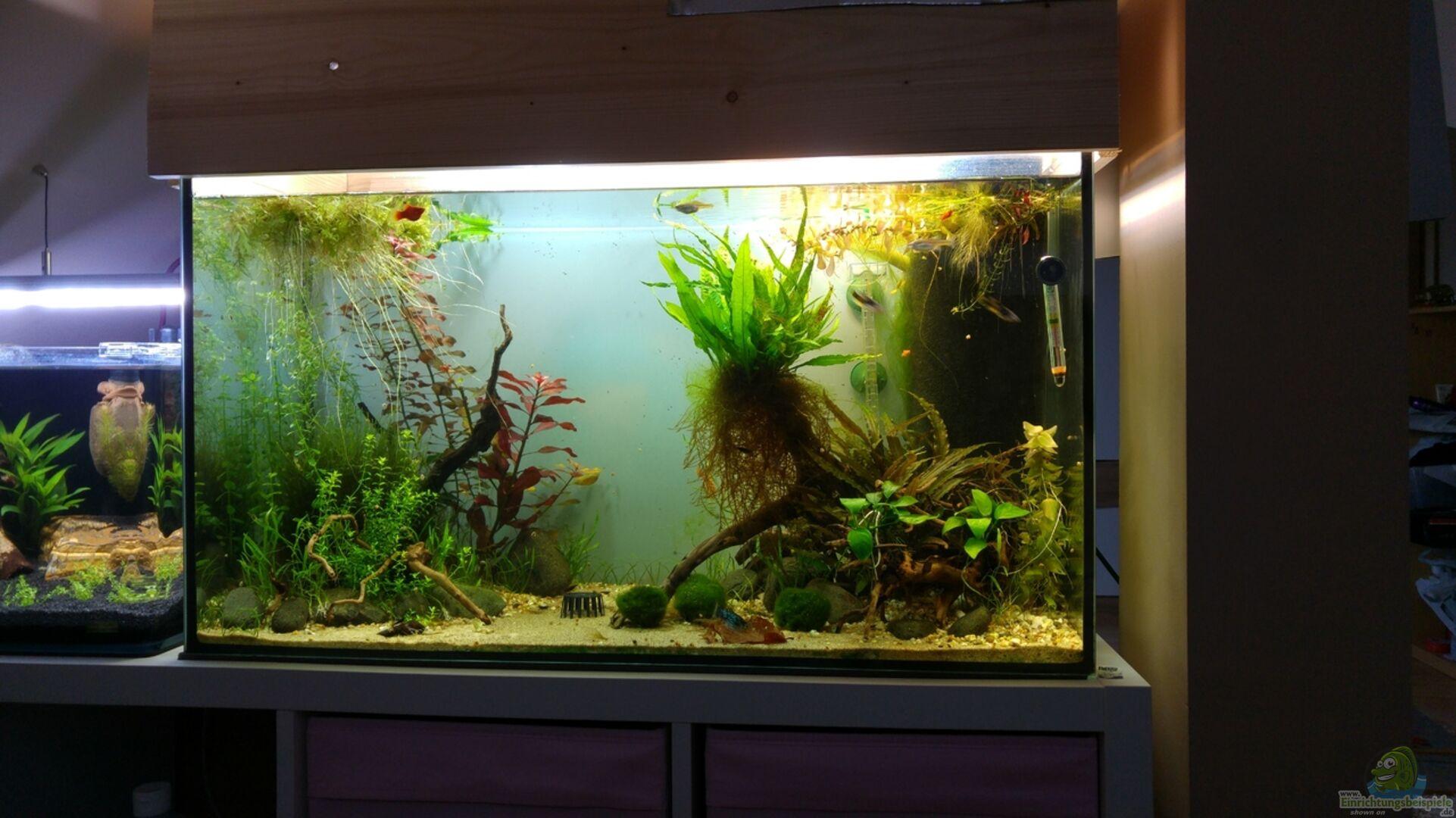 Ikea Kallax Aquarium Stand Kallax Von Ikea Als Aquarium