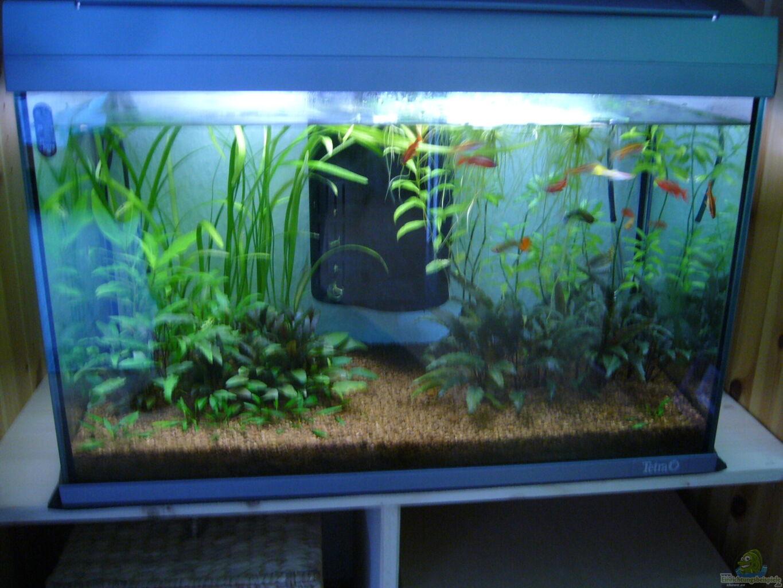 aquarium von davidk31 asien bach nur beispiel. Black Bedroom Furniture Sets. Home Design Ideas