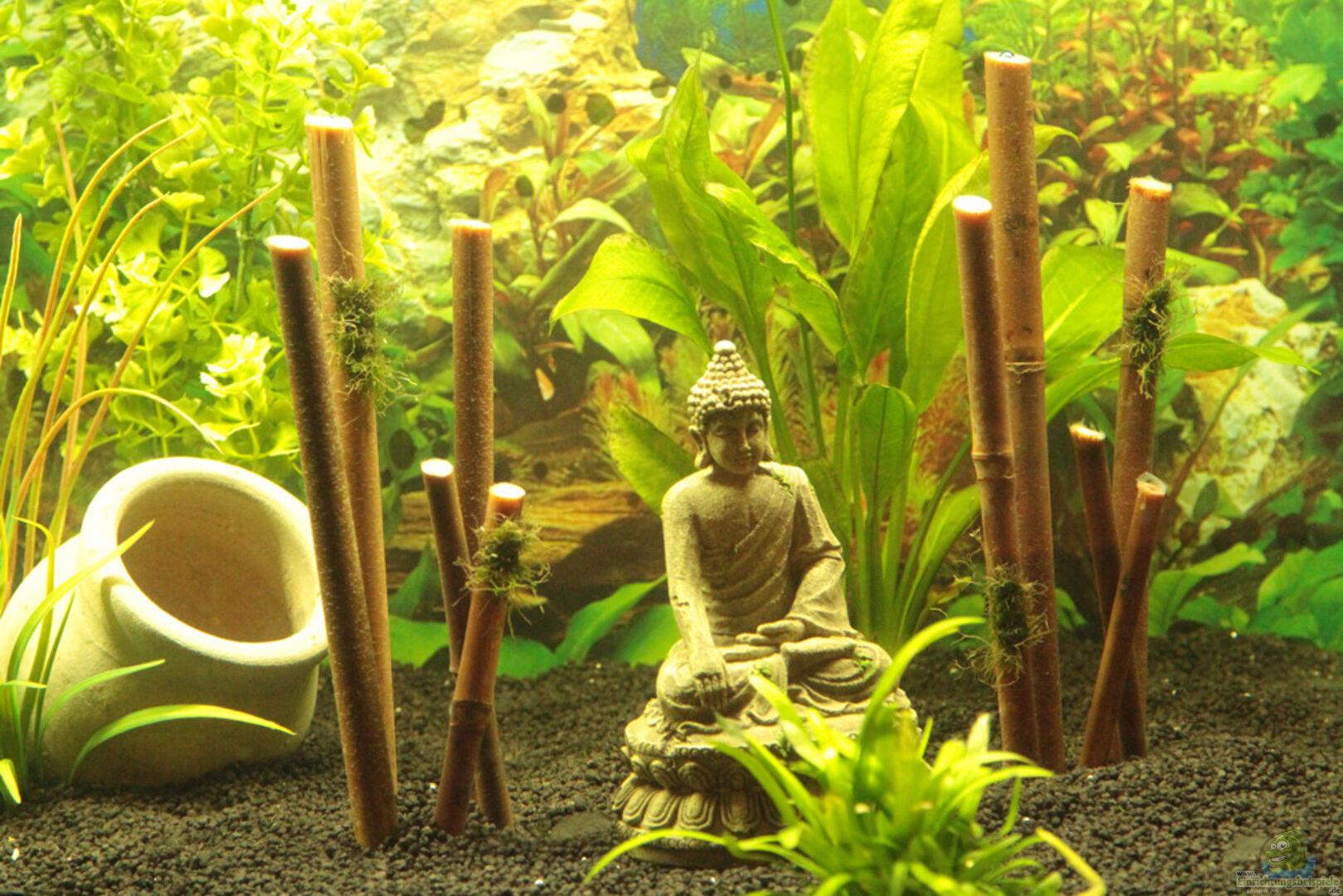 Bambus Mit Einem Buddha Aus 500l Fischeparadies Von Didi Don
