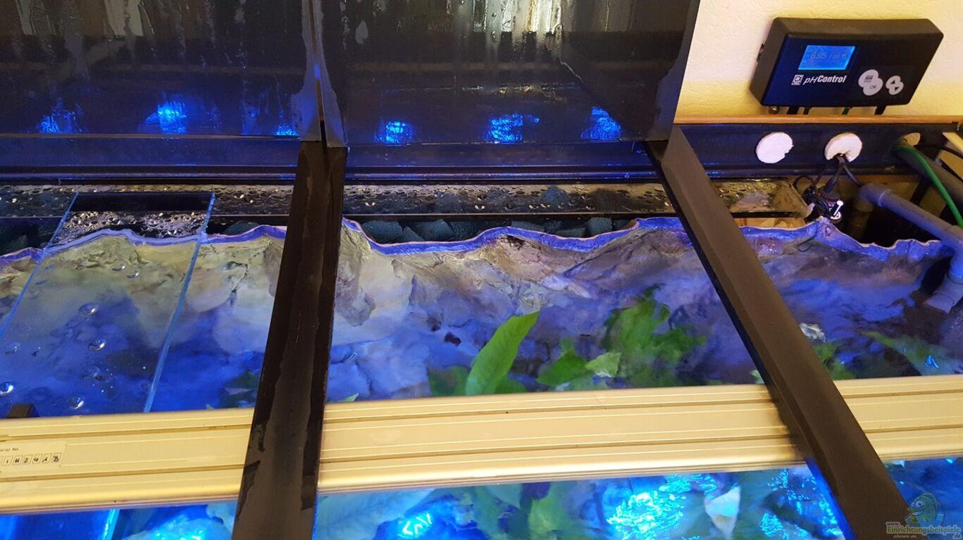 aquarien mit r ckwandfilter. Black Bedroom Furniture Sets. Home Design Ideas