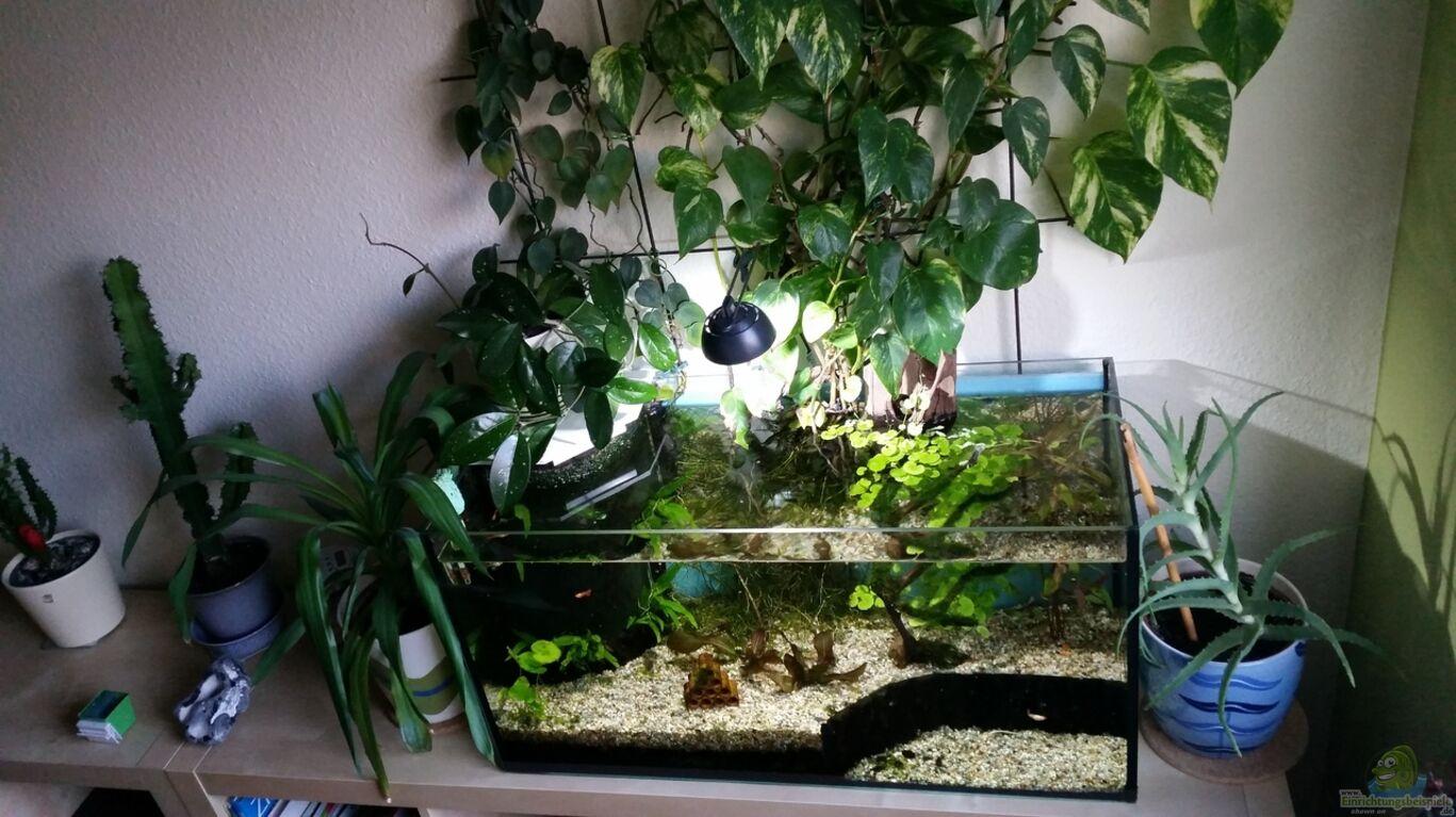 aquarium von gigi experimental aquarium 112 liter. Black Bedroom Furniture Sets. Home Design Ideas