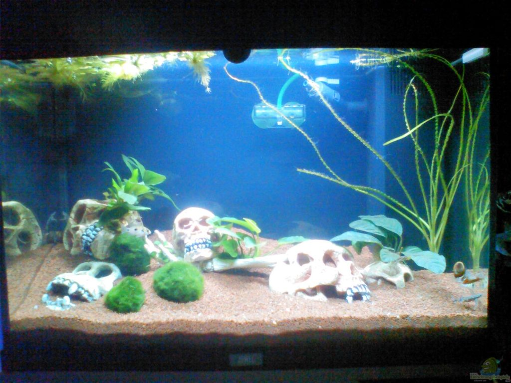 Aquarium deko selber machen amazing deko fur aquarium selber machen innen with aquarium deko - Deko fur aquarium ...