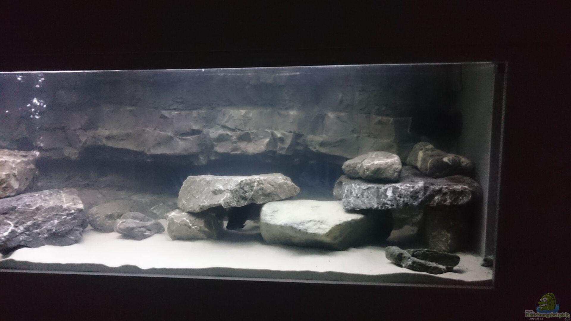 Aquarium von jens teichert becken 32521 for Aquarium becken
