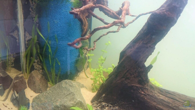 aquarium von aquaristik padawan green quarry. Black Bedroom Furniture Sets. Home Design Ideas