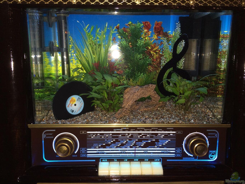 pflanzen deko 01 aus nano r hrenradio betta splendens von hanse hannes. Black Bedroom Furniture Sets. Home Design Ideas