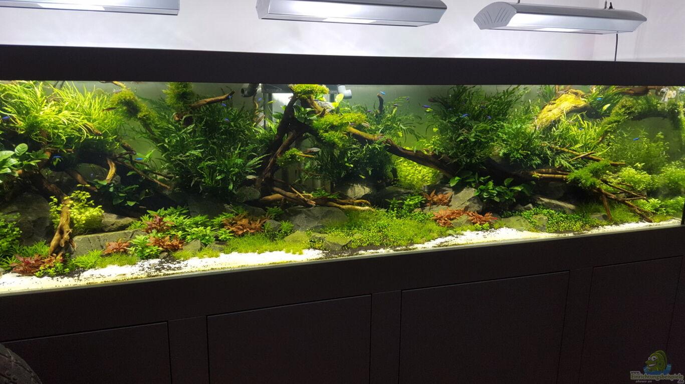 Aquarium von Sven Oelze: Naturaquarium Aquascape