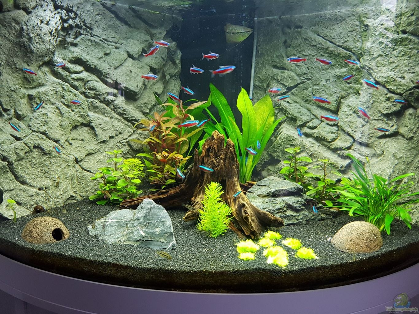 Example no 32551 from the category community tanks for Decoration aquarium 60 litres