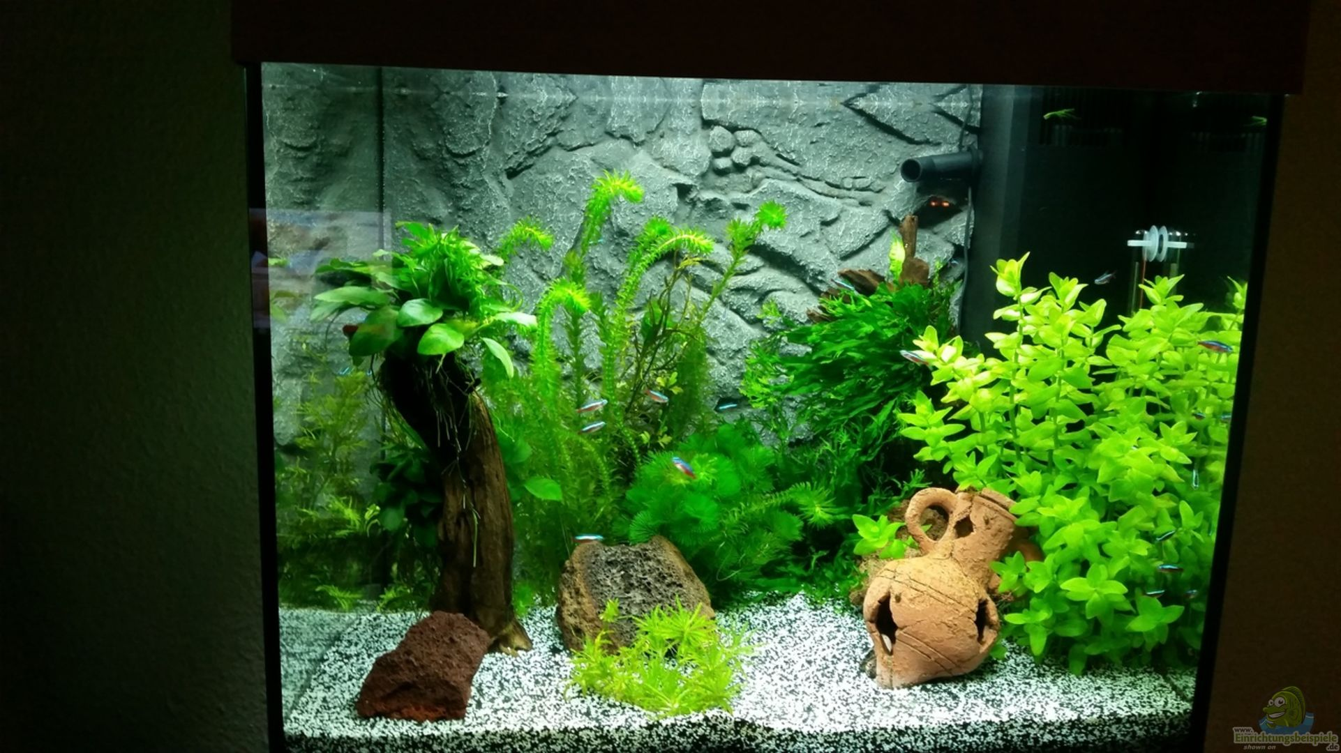 Aquarium vor einsatz der co2 anlage aus angie und roberts for Co2 anlage aquarium