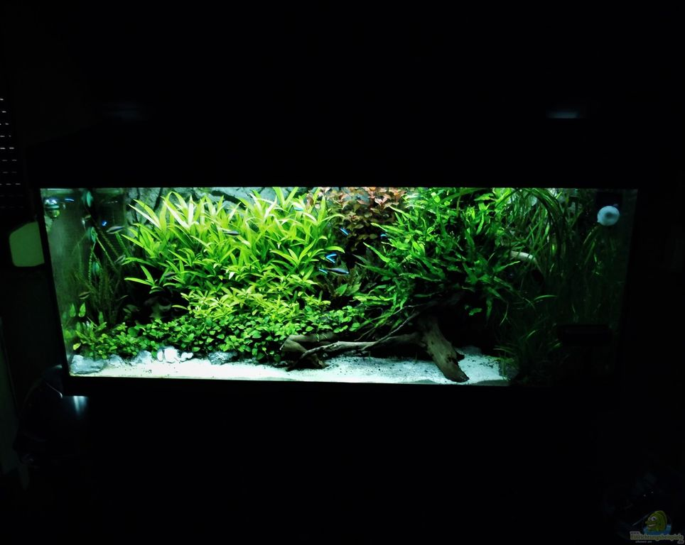 Aquarium von jah gaid mein aquarium for Mein aquarium
