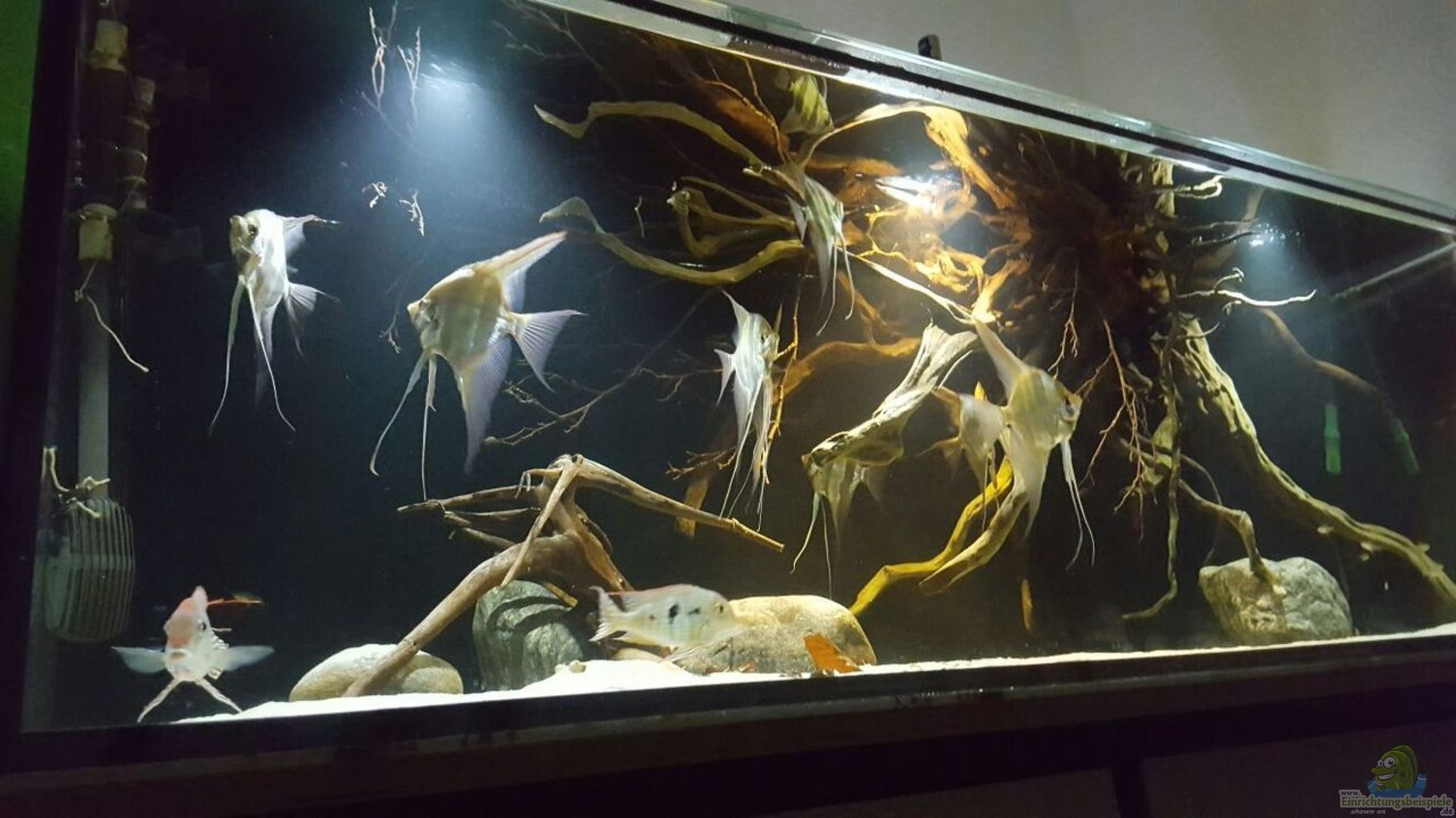 Aquarium von der fischer 1000l altum biotop for Aquarium einrichtungsideen