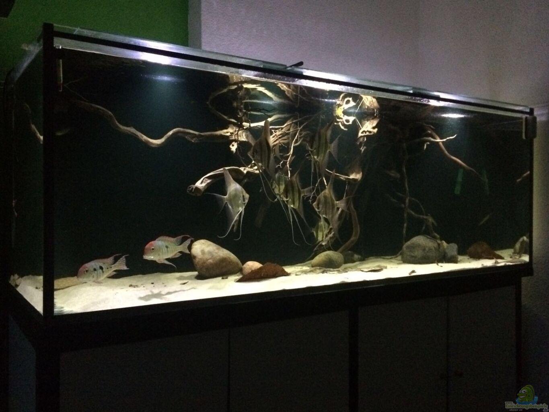 aquarium von der fischer 1000l altum biotop. Black Bedroom Furniture Sets. Home Design Ideas