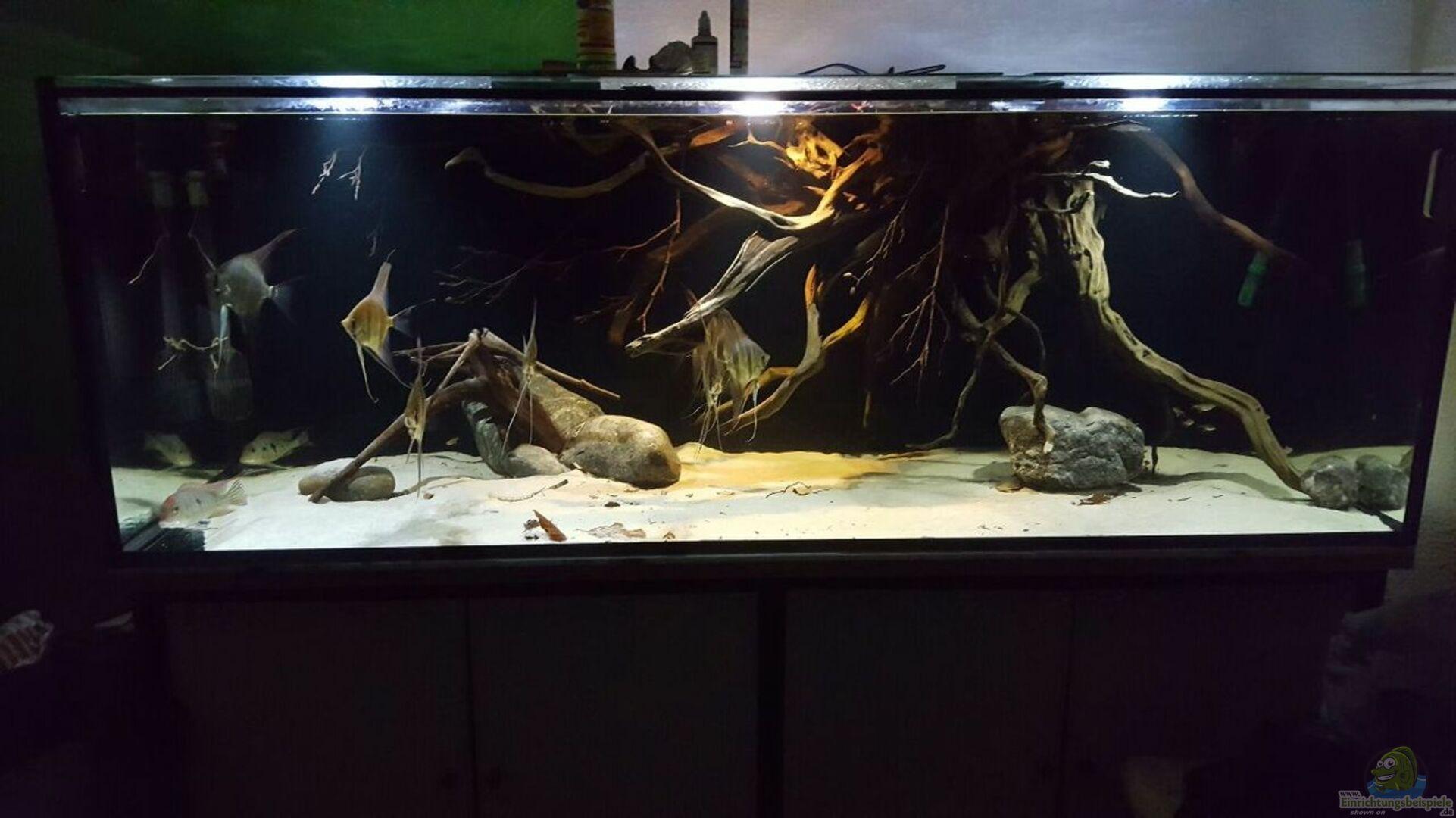 aquarium von der fischer 32562 1000l altum biotop. Black Bedroom Furniture Sets. Home Design Ideas
