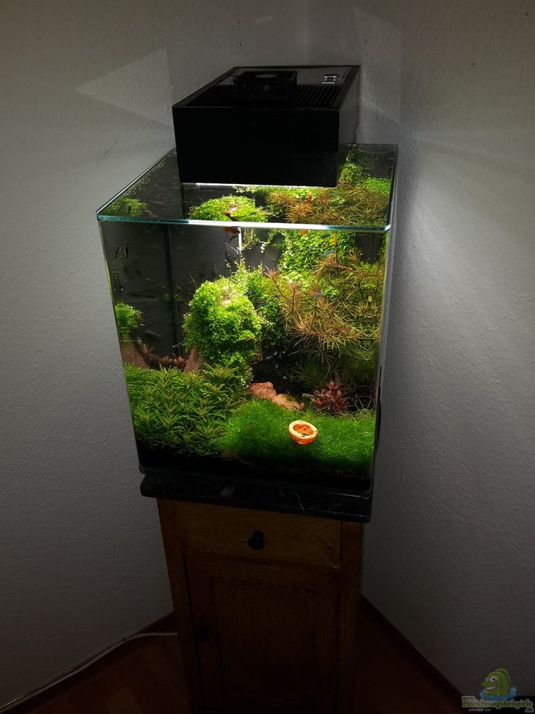 Example No 32564 from the category aquascaping