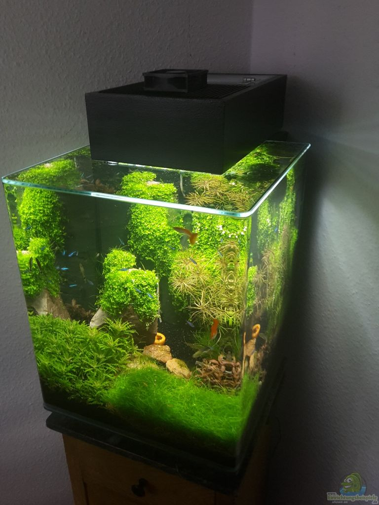 Example no 32564 from the category aquascaping for Aquarium nano cube