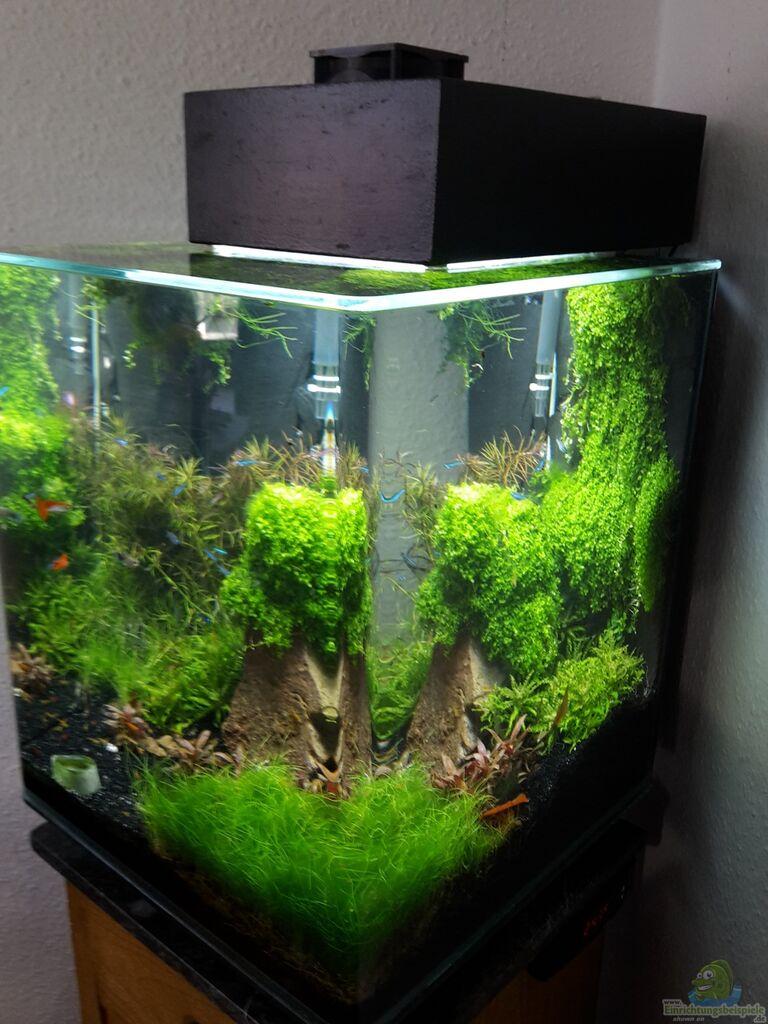 Aquarium von Schallex  Nano Cube meets Fluval Edge