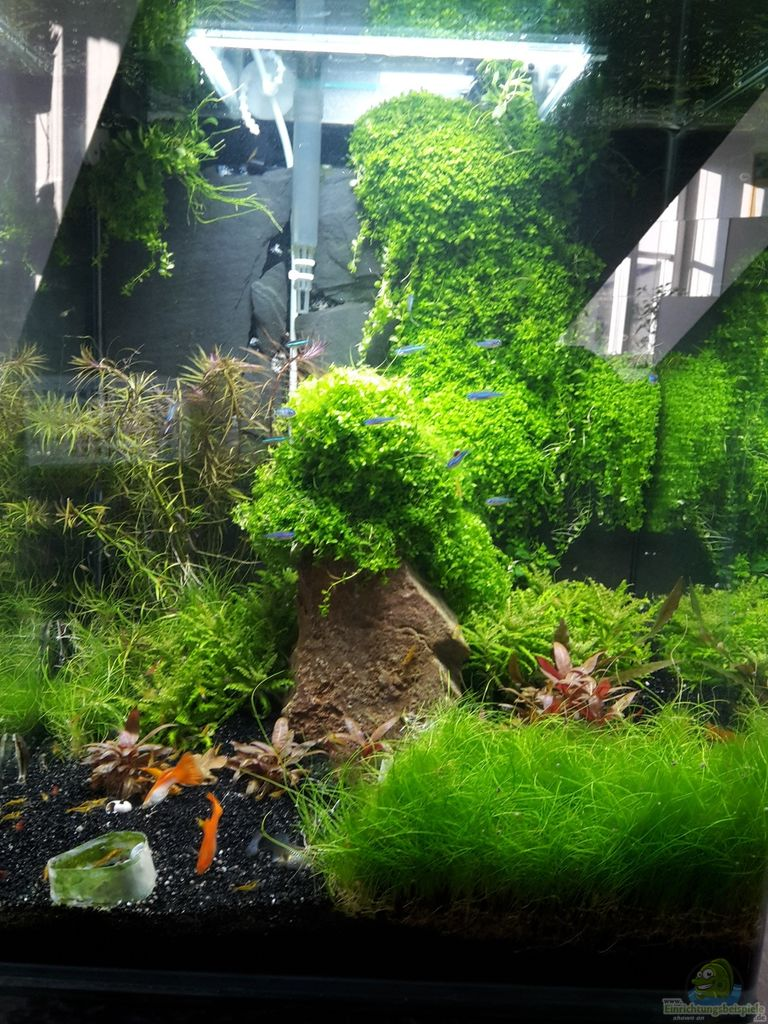 aquarium von schallex nano cube meets fluval edge. Black Bedroom Furniture Sets. Home Design Ideas