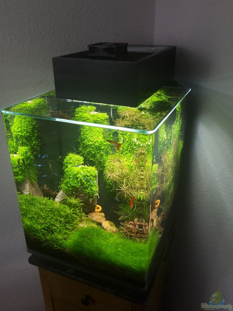 schallex 32564 nano cube meets fluval edge. Black Bedroom Furniture Sets. Home Design Ideas