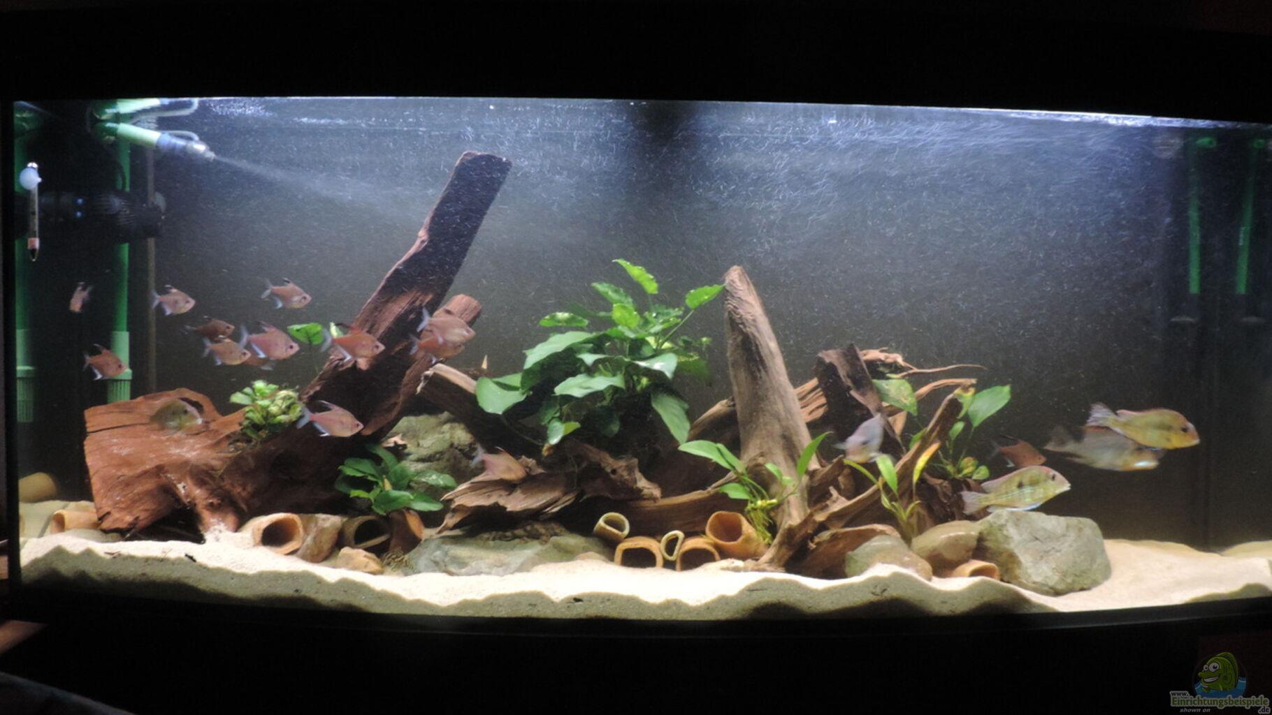 aquarium von fichte geo s revier aufgel st. Black Bedroom Furniture Sets. Home Design Ideas