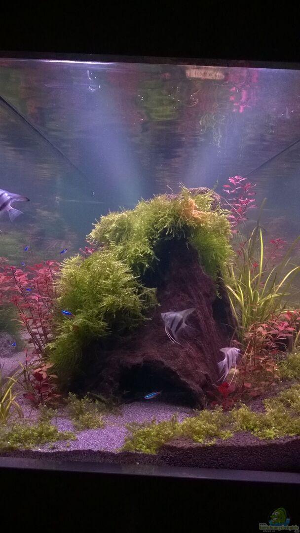 aquarium von aquatic becken 32605. Black Bedroom Furniture Sets. Home Design Ideas