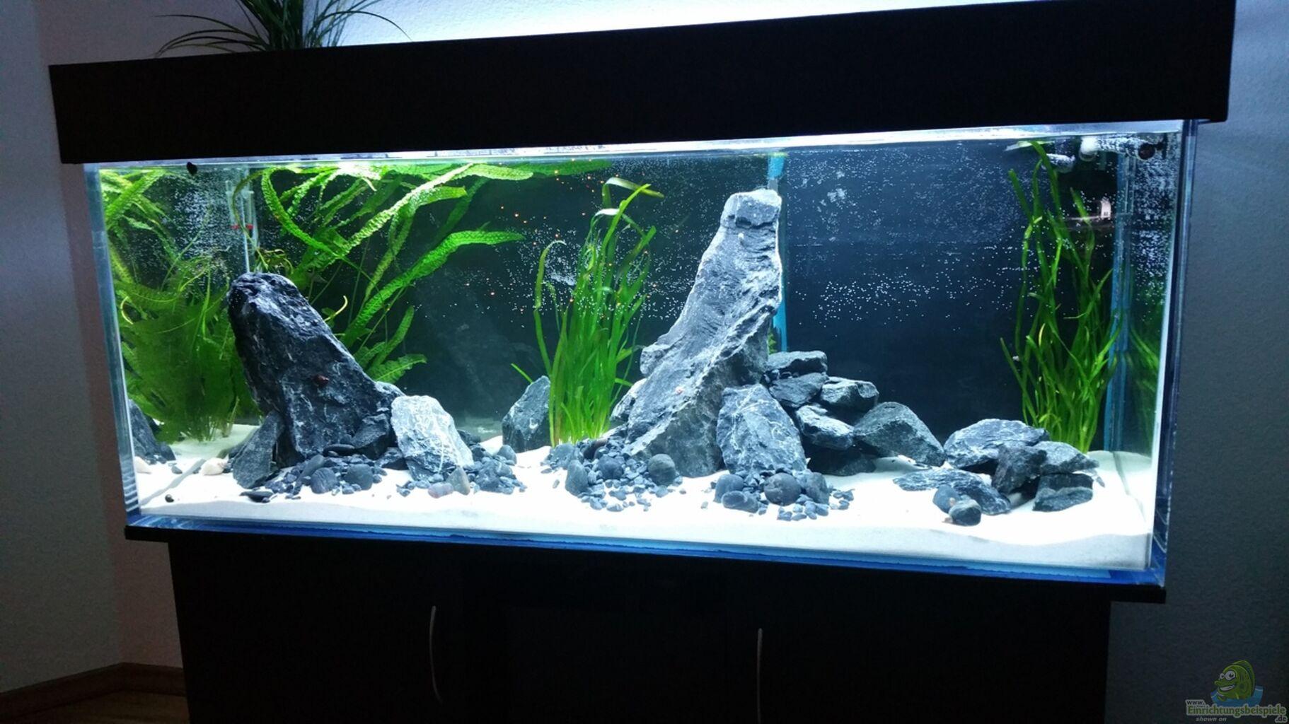aquarium von nadja9500 cichlidenbecken. Black Bedroom Furniture Sets. Home Design Ideas